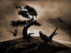 高機能ブログエディタ『Zoundry Raven』をインストールしてみよう